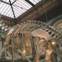 Dinosaurier | morguefile.com